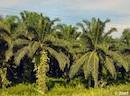 Tropical biofuels making matters worse