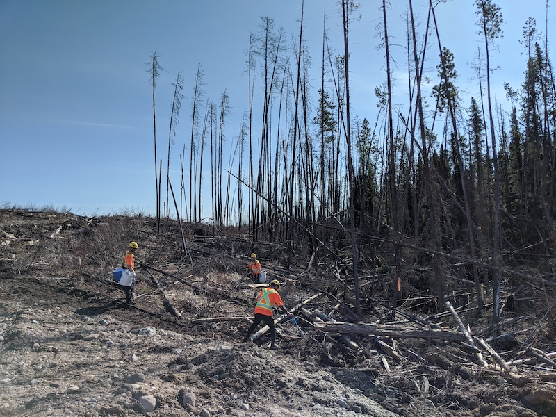 Pacific Bioenergy leads the way with salvage and reforestation program